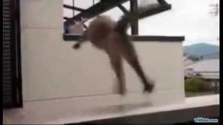 Cat Jump FAIL!