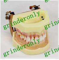 Средство для отбеливания зубов Dental lab Dentist endodontics tool Teaching Orthodontic demonstration Children Pathology Demonstration as seen on tv