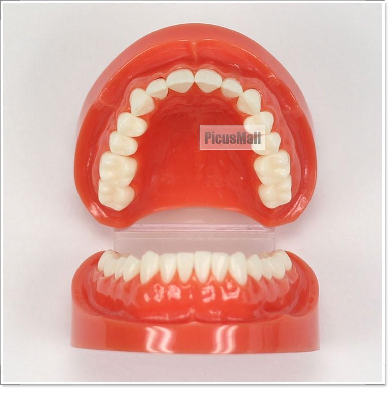 Как сделать своими руками макет зуба 24