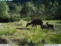 Фотокамера для охоты Ltl Acorn 5210A 12 Mega Pixel 940nm Stealth Trail Scouting Deer Hunting Game Spy Wildlife Camouflage Digital Video Camera 10pcs