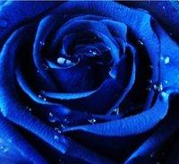 творческий подарок мини животное завод бонсай цветы роза розы в горшках фантастический мульти цвета доступны