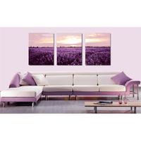 Картина W-Baby 2 /,  Lavender the ocean