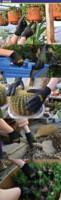 Защитные перчатки Germany Galilee brand gardening gloves / black M pncg 100726