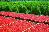 Сушеные фрукты Zhongning