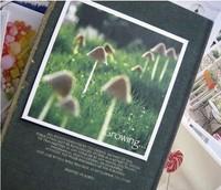 Поздравительная открытка shpping FLORASTUDIO , 70pcs s1369