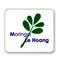 Ms. Moringa Viet Nam