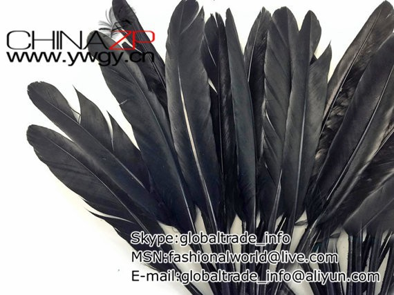 Blue Duck Feathers, lb - BLACK Duck Cochettes Loose Feathers (Bulk)