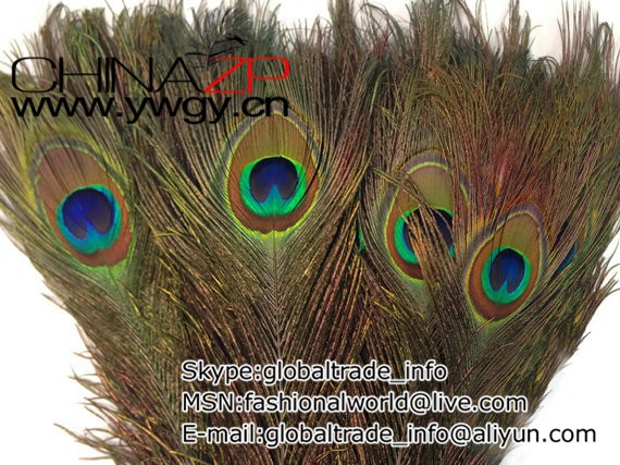 Wholesale Feathers, 10 Pieces - 30-35 NATURAL Peacock Tail Eye Wholesale Feathers (bulk)3