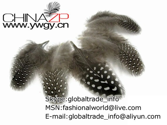 Guinea Feathers,  lb - NATURAL Guinea hen plumage Feathers Wholesale (bulk) 2