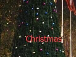 Christmas Tree-P1.2-2