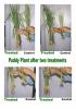 Kloro-Plus Plant Growth Regulator