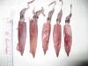 Se Frozen Loligo Squid 10 / 20 20 / 30 30 / 40 40 Cm / Pcs Up With Exclusive Quality