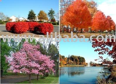 الأشجار المزهرة ولون الخريف والشجيرات