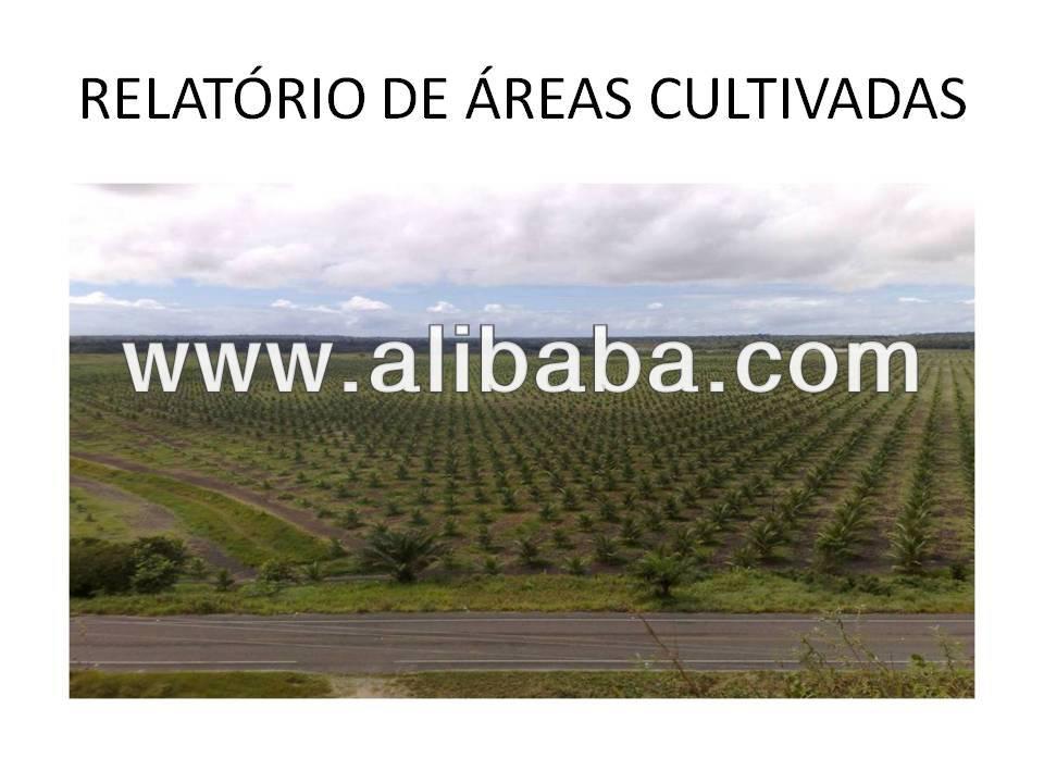 http://img.alibaba.com/photo/10458514/Virgin_Beaches_Farm___Tropical_Forest_Hotel.jpg
