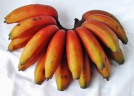 الاحمر معلومات فاكهة الاصفر