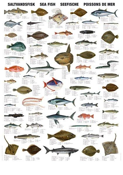 mar de los tipos de pescado - spanish.