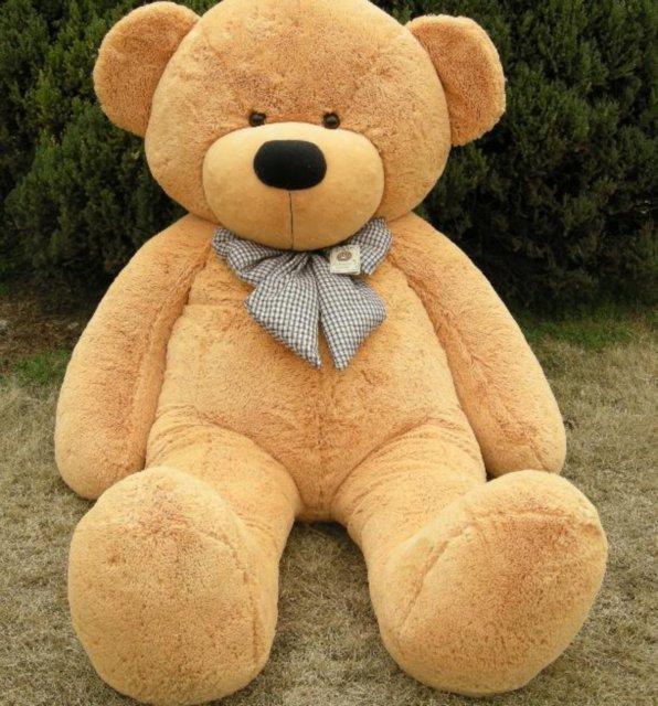 hombre es acusado de tener sexo con un oso de felpa por. Black Bedroom Furniture Sets. Home Design Ideas