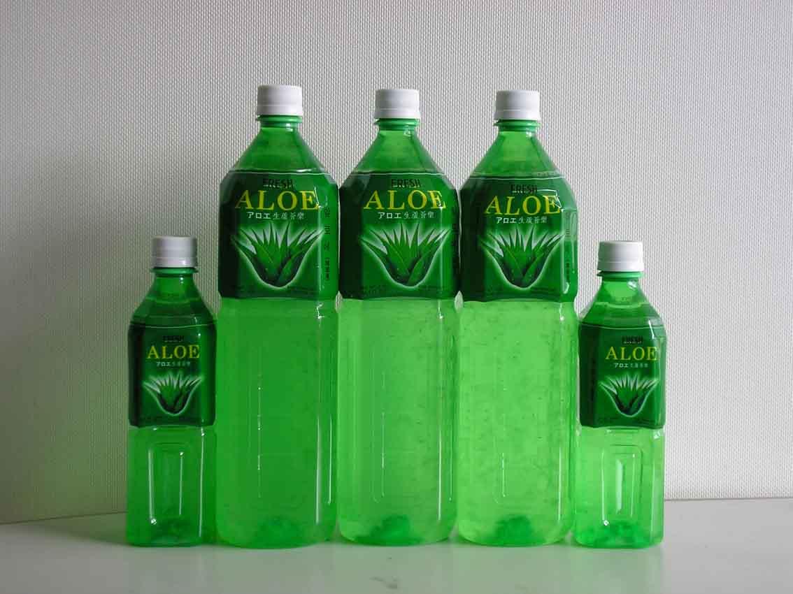 drink your aloe cactus jungle