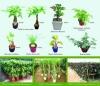 Plant And Bonsai