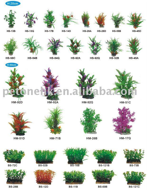 Hermoso jardin tropical p gina 27 plantas de jardin - Nombres de plantas de jardin ...