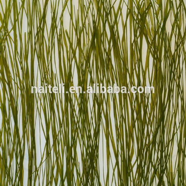 3 Form Acrylic Panels : Mare erba erbaccia pannello in acrilico decorativo