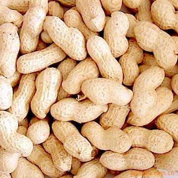 Raw_Peanuts_In_Shell.jpg