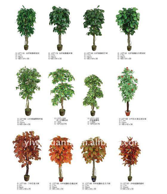 Imagenes de plantas con sus nombres para imprimir imagui for Nombres de los arboles de hoja perenne