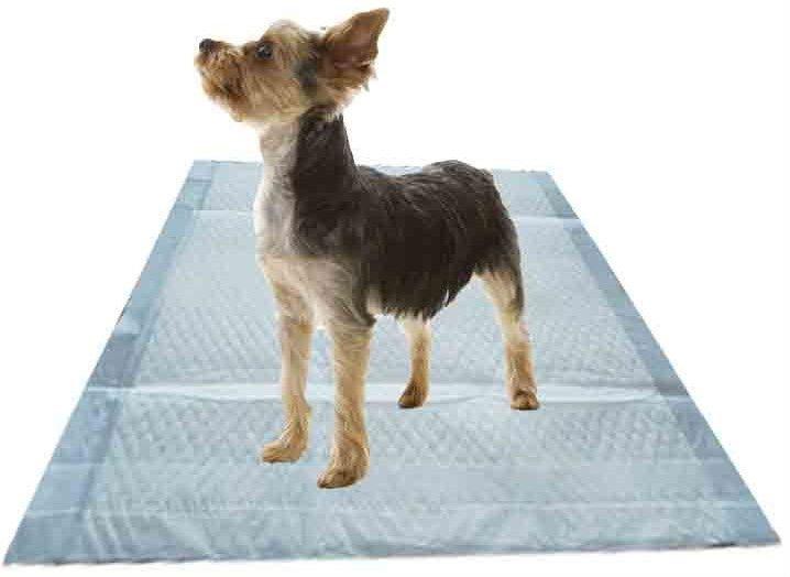 puppy pads training