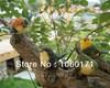 garden ornaments resin bird, outdoor backyard, garden, living room, hotel decoration large size 2 pieces/set free shipping