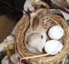 2 color ornaments handmade straw nest nest creative gardening garden supplies decorative bird cage top props shooting
