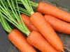 1 Pack 30 Seed Organic Vegetable Carrot Seeds Daucus Carota C002